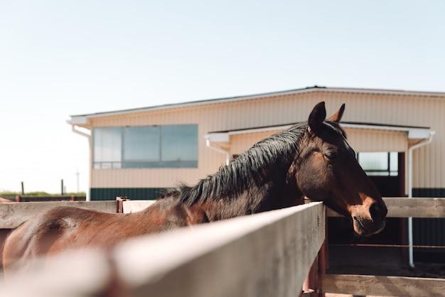 Pferd, das draußen steht. zur seite schauen.