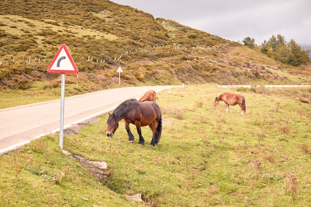 Pferd, das gefährlich nahe bei einer straße weiden lässt