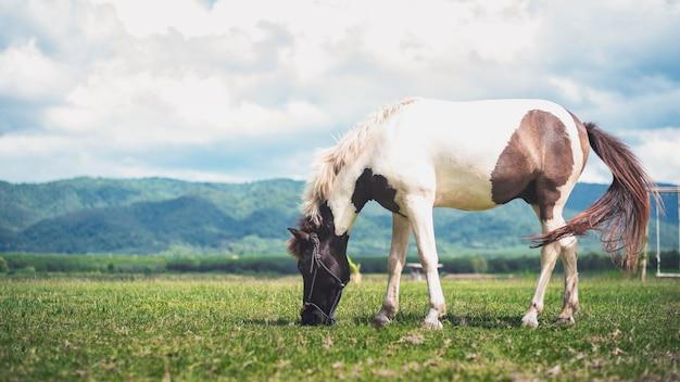 Pferd, das gras auf dem feld isst