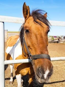 Pferd im freien porträt eines braunen pferdes