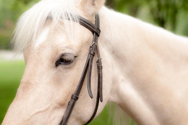 Pferd im park