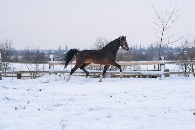 Pferd im winter im schnee außerhalb der stadt auf einem feld
