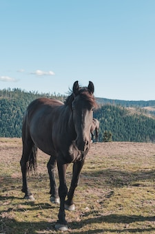 Pferd in den bergen