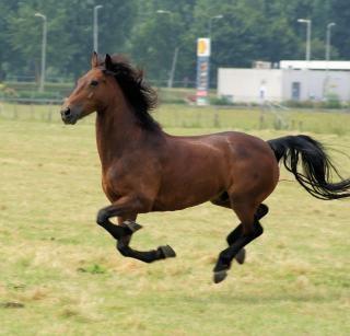 Pferd in den niederlanden, scheune