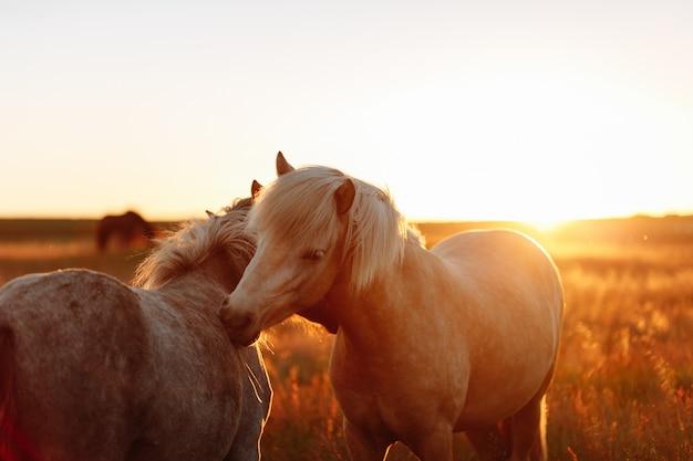Pferd in einem feld, nutztiere, naturserie