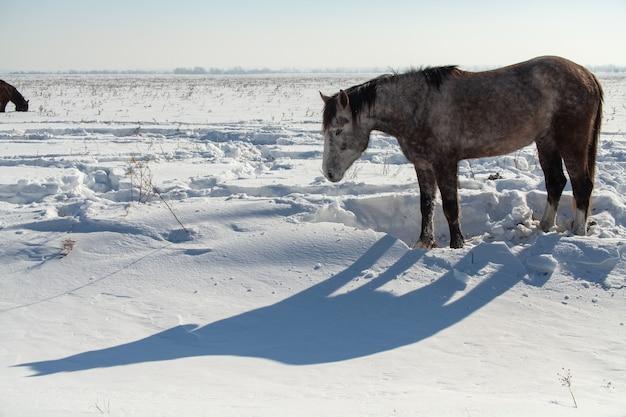 Pferd in einem winterfeld gegen wald und himmel, der schatten eines pferdes.