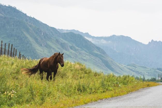 Pferd lässt auf rasen auf nebelhaften bergen unter bewölktem himmel weiden.
