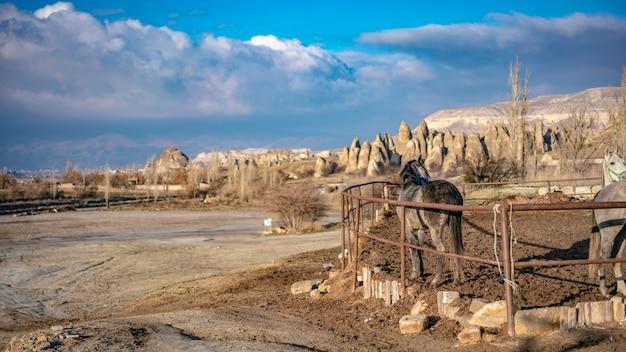 Pferd mit kappadokien-landschaft, die türkei
