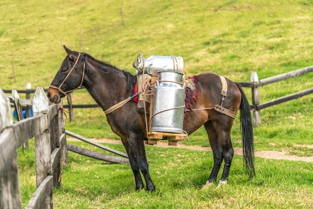 Pferd mit kuhmilch