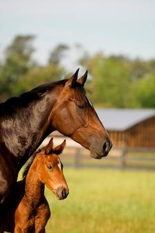Pferd und hengstfohlen