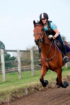 Pferd und reiter in einem feld