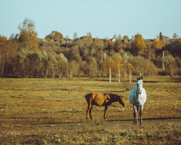 Pferd zu fuß