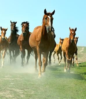 Pferde auf dem bauernhof im sommer