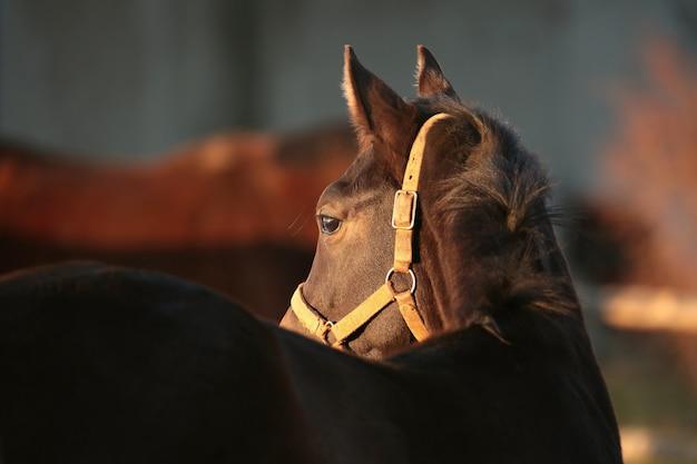 Pferde auf einer weide in der abenddämmerung