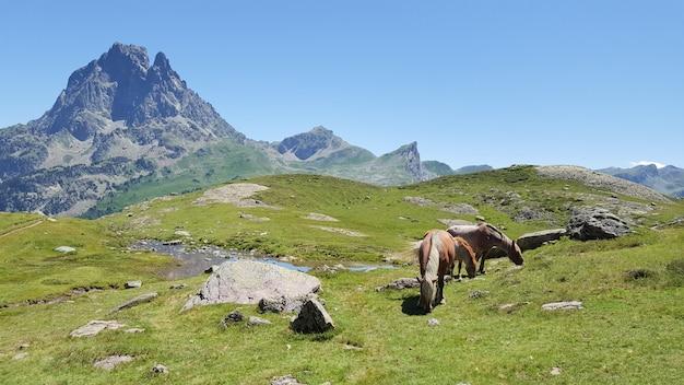 Pferde, die auf bergen essen und frei gehen