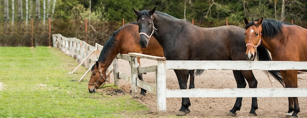 Pferde, die auf einem gebiet nahe der koppel weiden lassen