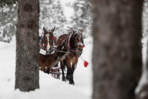 Pferde, die auf kalten winterwald laufen