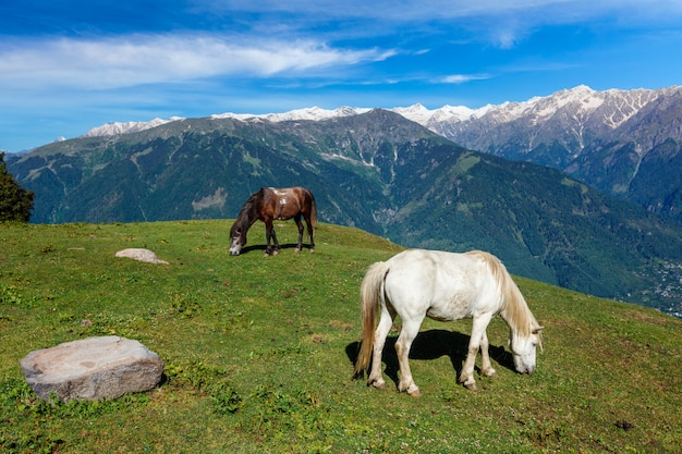 Pferde, die in bergen grasen