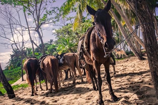 Pferde, die in einer gruppe angebunden sind und darauf warten, die reise fortzusetzen