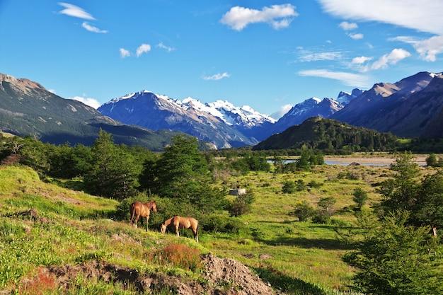 Pferde im dorf el chalten in patagonien