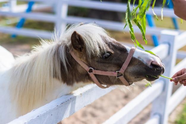 Pferde im zoo