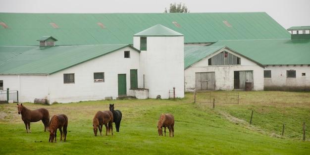 Pferde in der koppel vor landwirtschaftlichen gebäuden