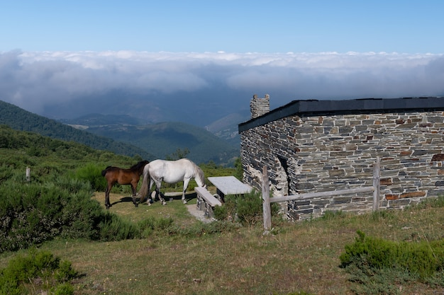 Pferde in der nähe eines hirtenhauses in den bergen, berglandschaft