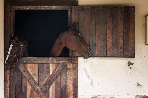 Pferde in einem stall mit blick nach draußen.