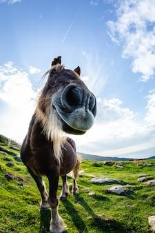 Pferde mit lustigen und neugierigen gesichtern in freiheit am berg
