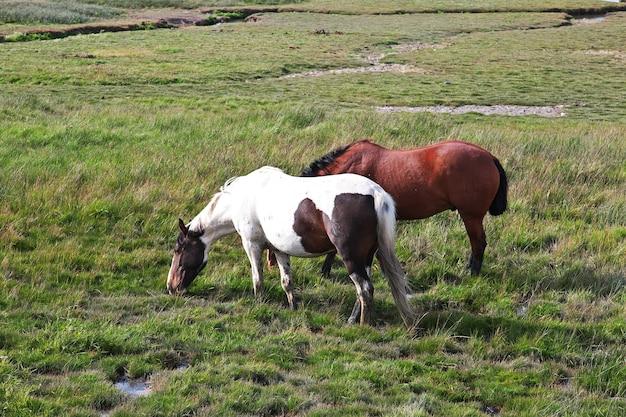 Pferde schließen lago argentino in el calafate patagonia argentina