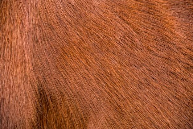 Pferdefell nahaufnahme hintergrund oder textur
