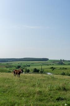 Pferdegrasen auf der wiese, felder und wiesen, landschaft