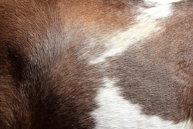 Pferdehaarhautbeschaffenheit braun und weiß