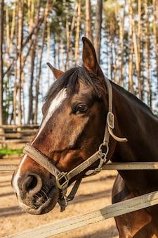 Pferdekopf mit zaumzeug