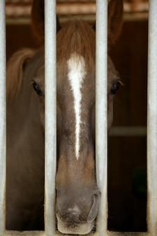 Pferdeporträt, traurig auf der anderen seite des stallgefängnisses