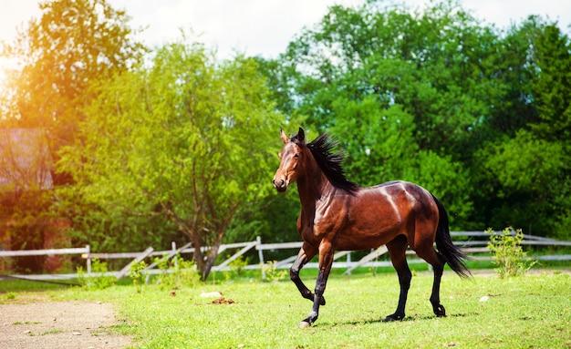 Pferderennen galoppieren auf der wiese