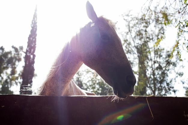 Pferdeschattenbild