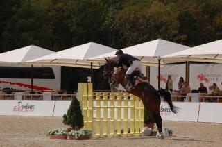 Pferdesport, der Rasse, Pferd