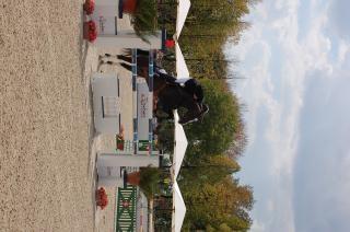 Pferdesport, der rasse