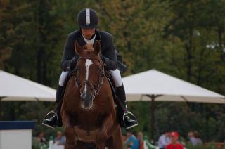 Pferdesport, gründlich, sattel
