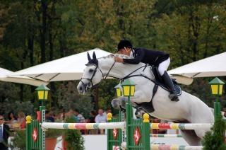 Pferdesport, pferd, springen