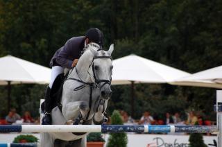 Pferdesport, zucht