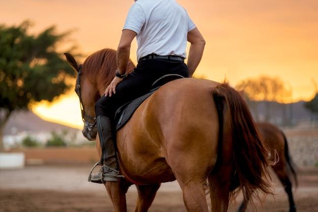 Pferdetraining während des szenischen sonnenuntergangs