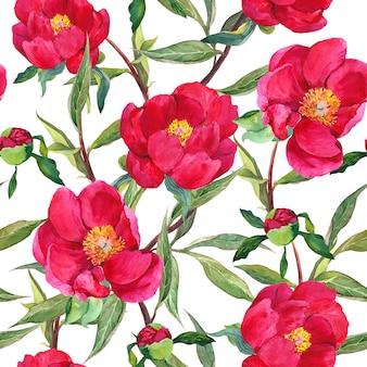 Pfingstrosen rote blüten. floraler sich wiederholender hintergrund. aquarell