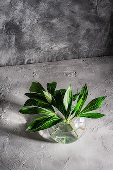 Pfingstrosengrüne blätter in glaskugelvase mit wasser