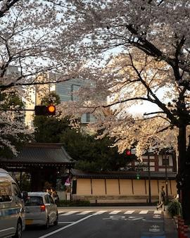 Pfirsichbaumblüte in tokio