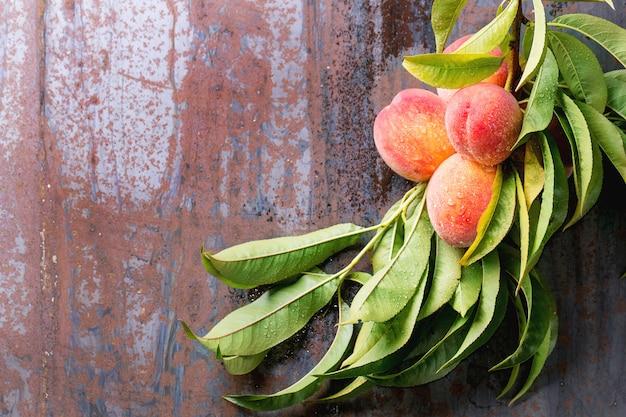 Pfirsiche am zweig