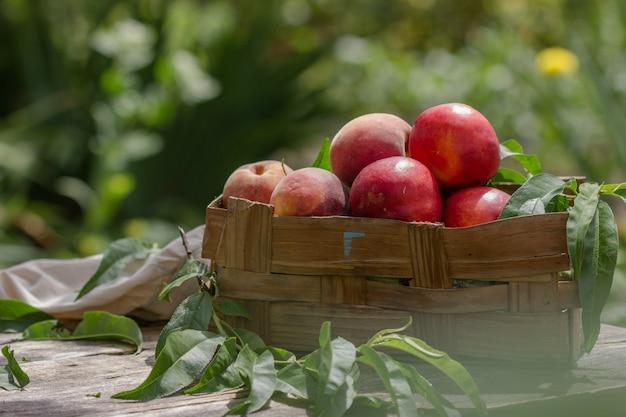 Pfirsiche mit blättern in einer holzkiste auf natürlichem garten