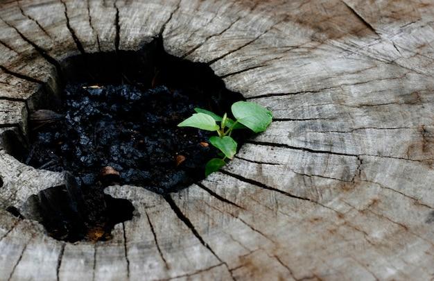Pflanze auf dem baumstumpf geboren