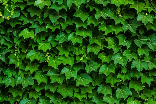 Pflanze auf dem hintergrund. layout der blätter. kann als textur verwendet werden